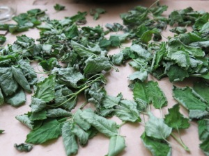 Here's the Lemon Balm after air drying for about 24 hours.