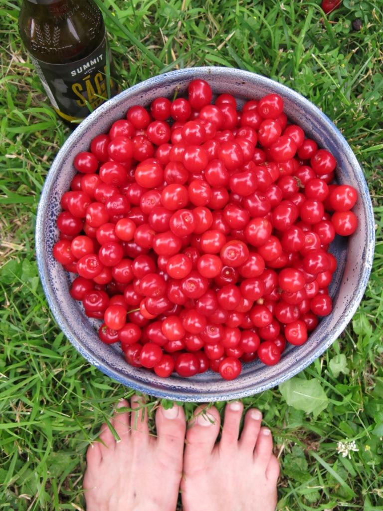 cherries and saga