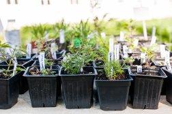luann's plants