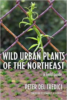 wild urban plants of the northeast book cover