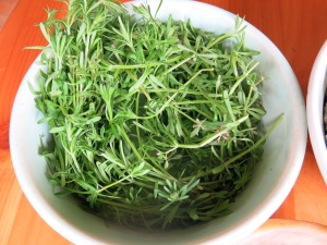 cleavers harvest
