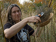 cynthia thomas harvesting nettles