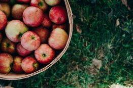 thayer apples 3